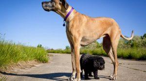 Köpek Ring Eğitimi
