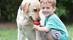 Yavru Köpek Eğitim Merkezi