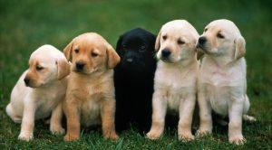 Üsküdar Köpek Eğitimi