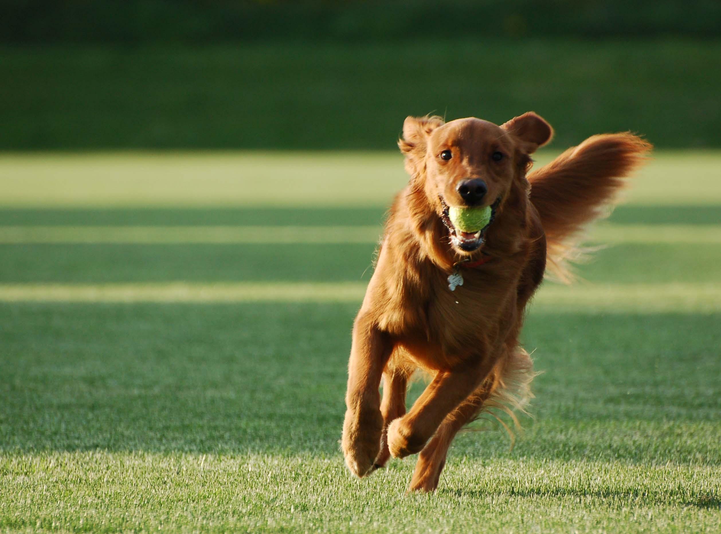 Köpek Eğitimi Tuzla