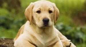 Köpek Pansiyonu Etiler