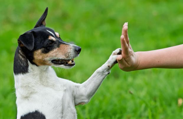 Sultangazi Köpek Eğitimi