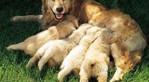 Bursa'daki Köpek Çiftlikleri
