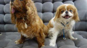 Köpek eğitim merkezi ruhsatı