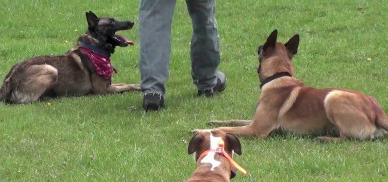 Zeytinburnu Köpek Eğitimi
