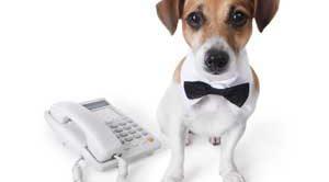 Satılık Köpek Aydın