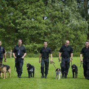 Terrier Manchester Köpek Eğitimi