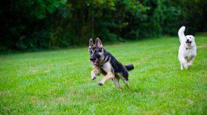 Sultan gazi Köpek Eğitimi
