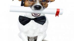 Şişli Köpek Eğitimi