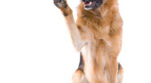 Silivri Köpek Eğitimi