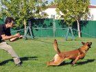 Kartal Köpek Eğitim Çiftliği