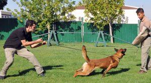 Beylikdüzü Köpek Eğitimi