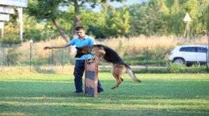 Beyoğlu Köpek Eğitim Merkezi