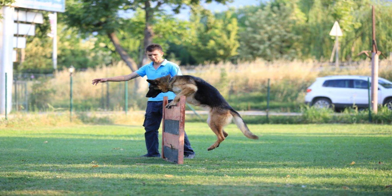 Anadolu Hisarı Köpek Eğitimi