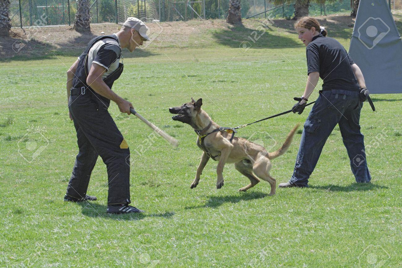 Boxer Köpek Eğitimi