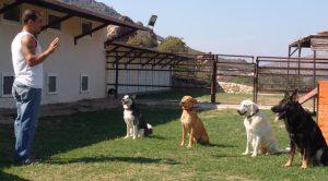Kağıthane Köpek Eğitim Çiftliği