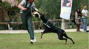 Şile Köpek Eğitimi