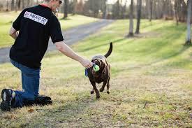 Köpek Eğitimi Ümraniye