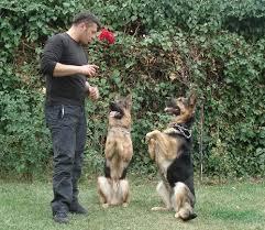Bahçelievler Köpek Eğitim Merkezi