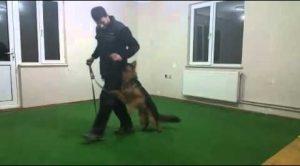 Başakşehir Köpek Eğitim Merkezi