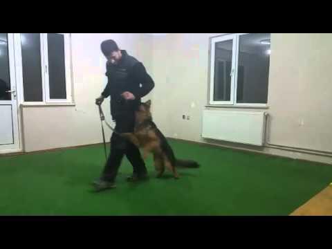 Avcılar Köpek Eğitimi