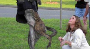 Köpek Eğitim Yerleri