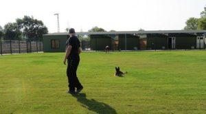 Çekmeköy Köpek Eğitim Merkezi