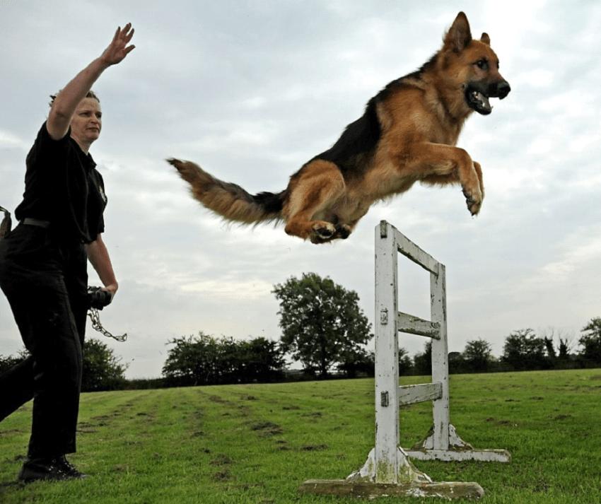 Köpek Eğitimi Akbaş