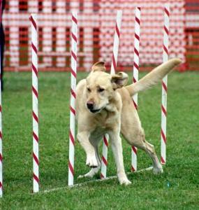 Köpek Eğitimi Sancaktepe