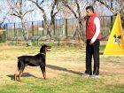 Şamandıra Köpek Eğitimi