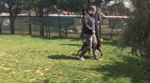 Köpek Eğitimi Maltepe Adresi