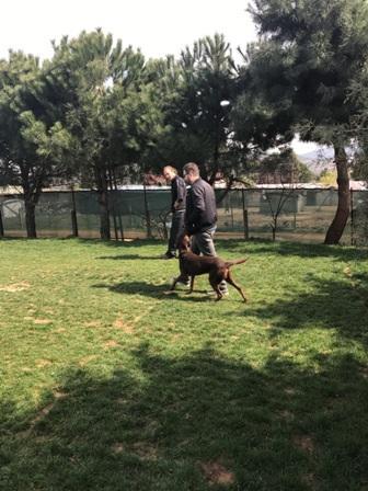 Köpek Eğitimi Chow Chow İstanbul
