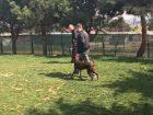 Hasköy Köpek Eğitimi