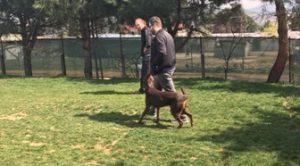 Etiler Köpek Eğitimi