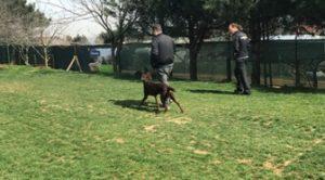 Şişhane Köpek Eğitimi