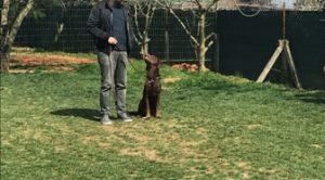 Köpek Eğitimi Şişli Adresi