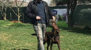 Köpek Eğitimi Esenler Adresi