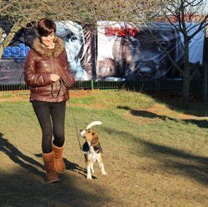 Terrier White Köpek Eğitimi Eğitmeni