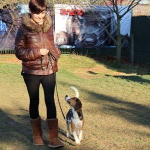 Bahçelievler Köpek Pansiyonu En İyisi