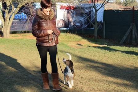 Pozitif Köpek Eğitimi