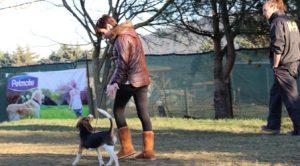 Pendik Köpek Eğitim Çiftliği İstanbul