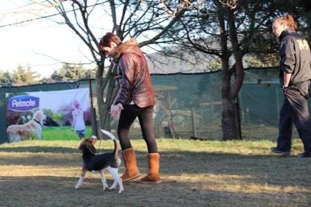Köpek Temel Eğitim