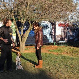 Pointer Köpek Eğitimi Eğitmeni
