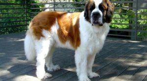 Maltepe köpek pansiyonu