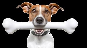 Sancak tepe Köpek Eğitimi