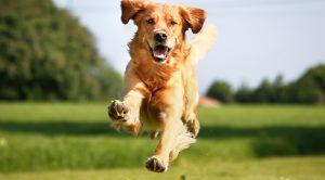 Küçükçekmece Köpek Pansiyonu
