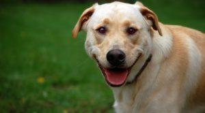 Köpek pansiyonu Kadıköy