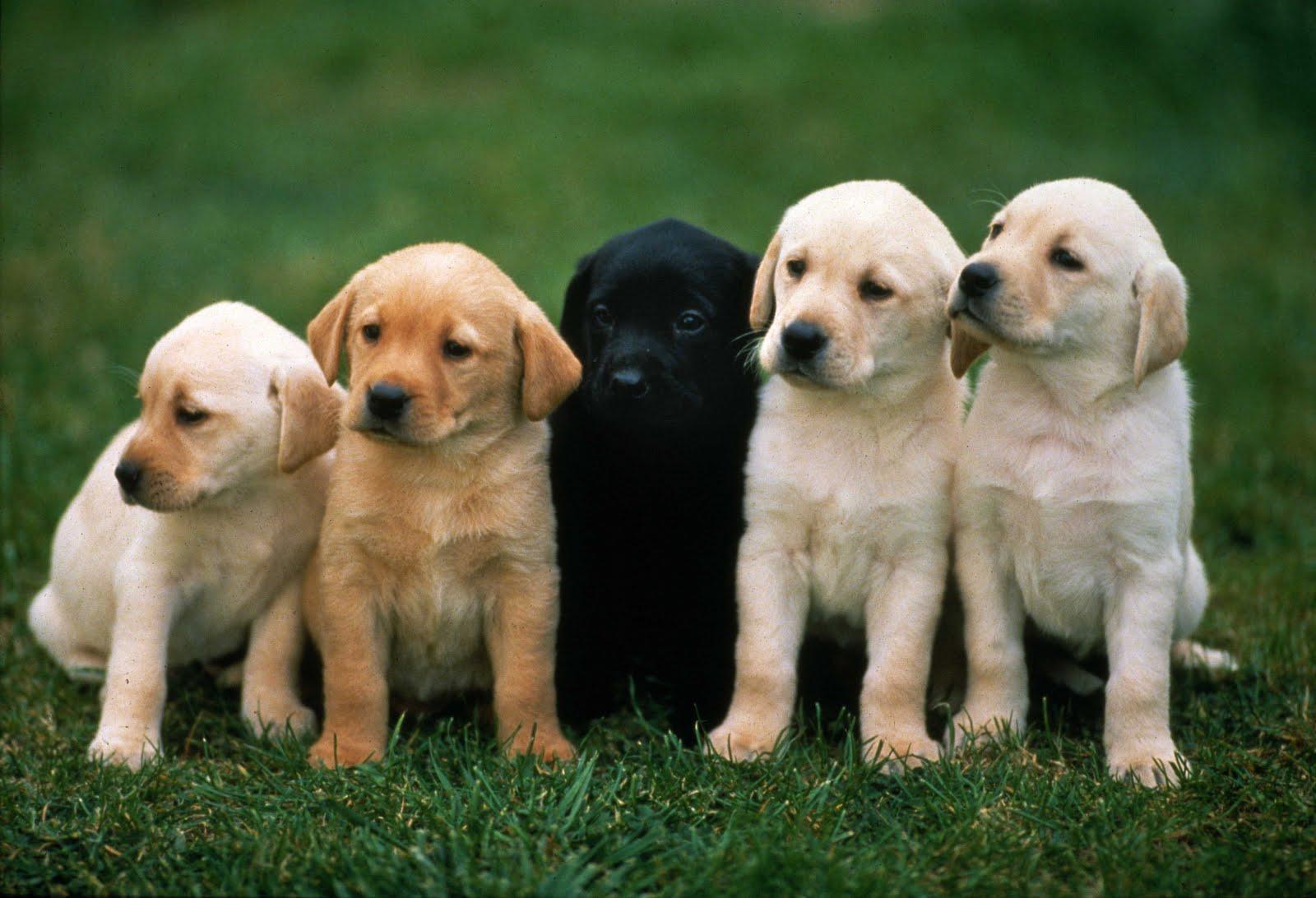 Köpeğinize Sımsıcak Bir Yuva İçin Bakırköy
