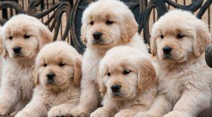 Köpek Eğitimi Bilgileri