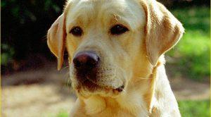 Satılık Köpek Antalya